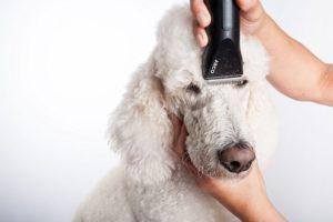 hunde scheren anleitung