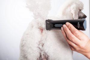 hundehaarschneider test